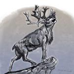 caribou-sketch4